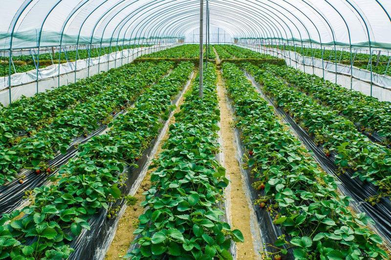 微生物肥料应用
